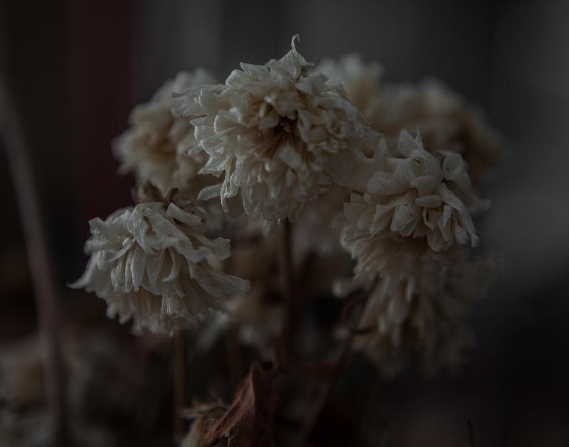 fleur-2014-clement-fontaine